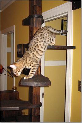 Best 1000 Images About Cat Stairs On Pinterest 400 x 300